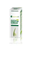 Huile Essentielle Bio Eucalyptus Globuleux à TOURNAN-EN-BRIE